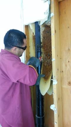 honey removal blog (2)