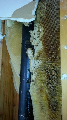 honey removal blog